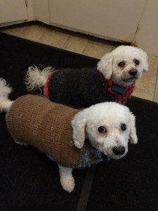dogs in coats 3